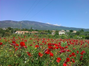Mont Ventoux in May